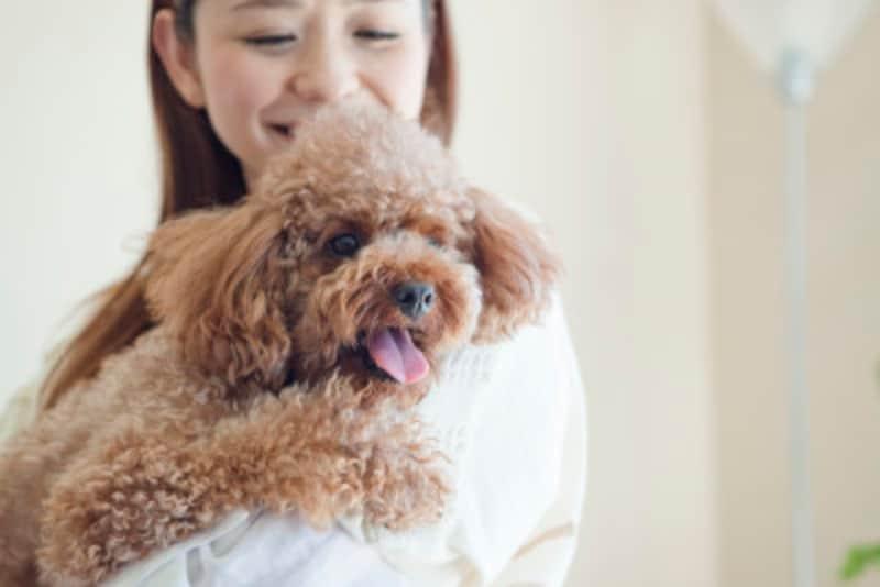 ペット好きに愛玩動物飼育管理士の資格