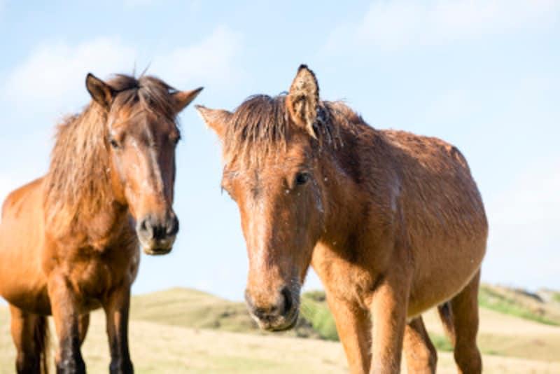 たまには、ゆっくりお馬を眺めるのもいい!
