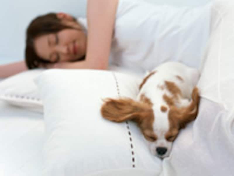 正しい姿勢で眠りましょう!