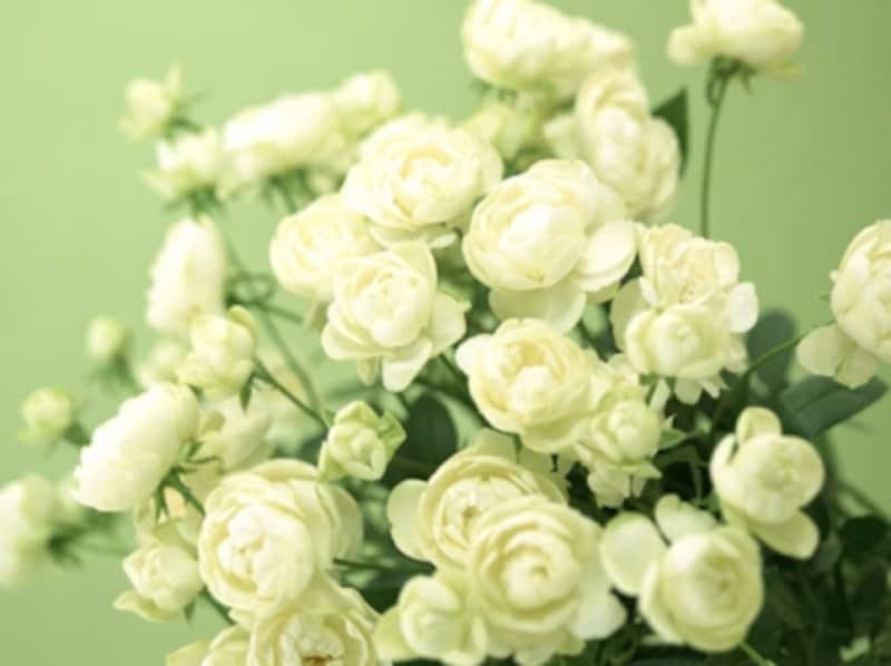 切り花を一番長持ちさせるのは?普通の水・重曹入り・延命剤入りで実験比較!