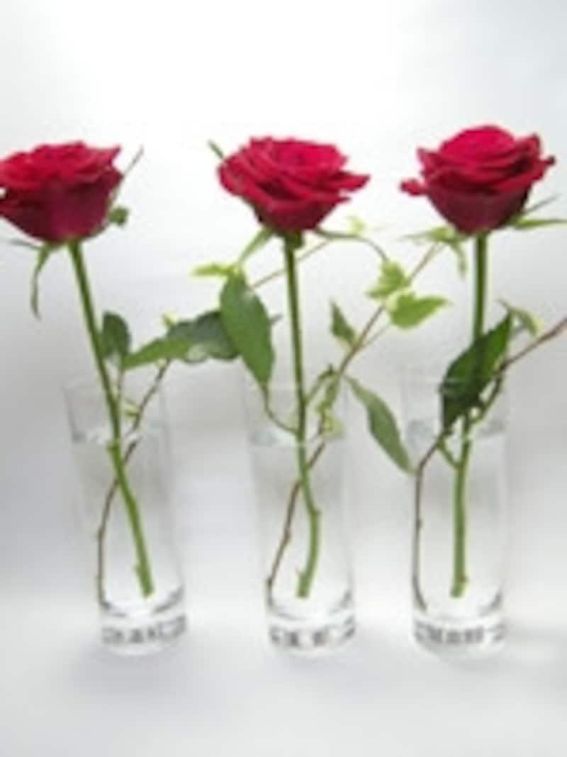 切り花を長持ちさせる方法の比較実験1日目の様子