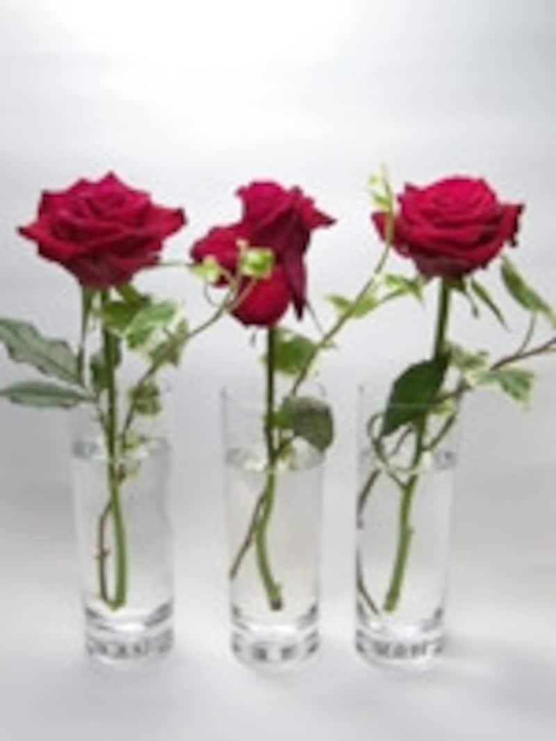 切り花を長持ちさせる方法の比較実験3日目の様子