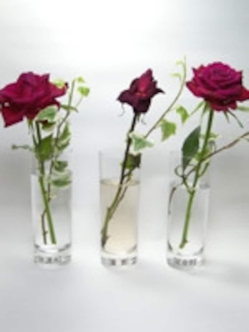 切り花を長持ちさせる方法の比較実験5日目の様子