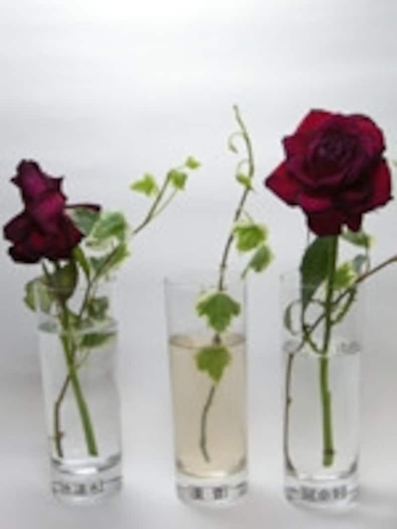 切り花を長持ちさせる方法の比較実験7日目の様子