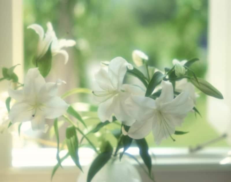 ユリの切り花を長持ちさせるコツ