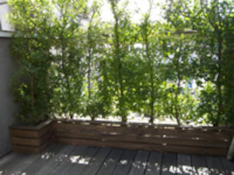 木製プランターの完成
