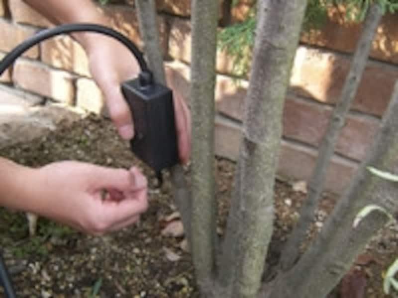樹木への電飾の取り付け方手順。スイッチボックスが正面から見えないように注意