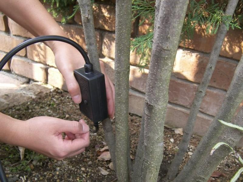 自宅の樹木へのイルミネーション飾り方・取り付け方・巻き方 手順1