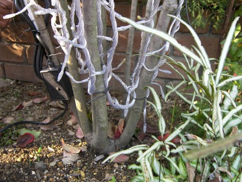 自宅の樹木へのイルミネーション飾り方・取り付け方・巻き方 手順5
