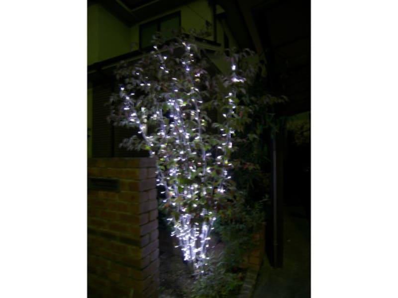 自宅の樹木へのイルミネーション飾り方・取り付け方・巻き方 完成