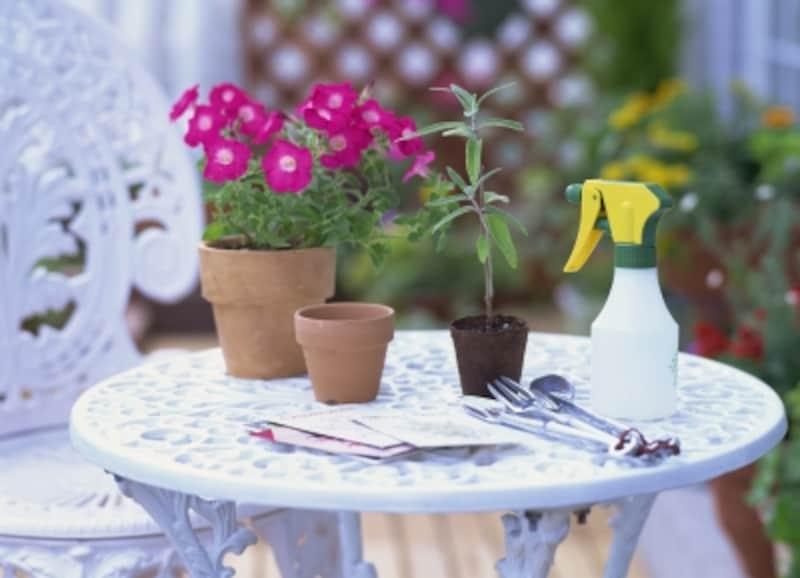 鉢植えに植え替える方法とは