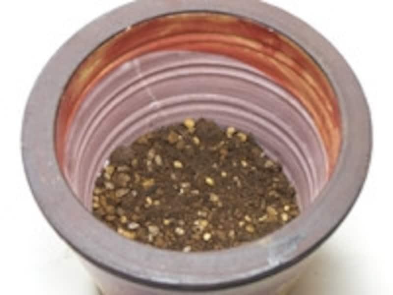 苗を鉢植えに植え替える手順3