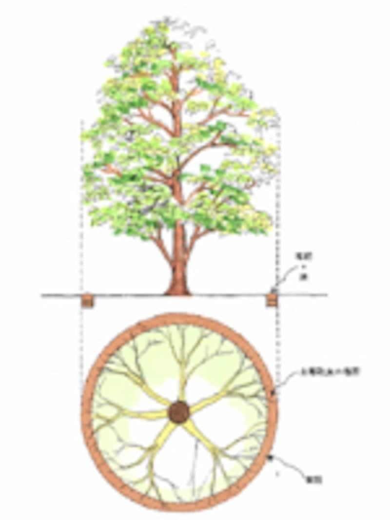 図解:根鉢