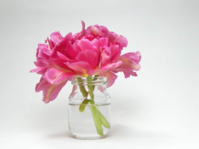 球根類の花は、切り取った後、アレンジメントで楽しんで