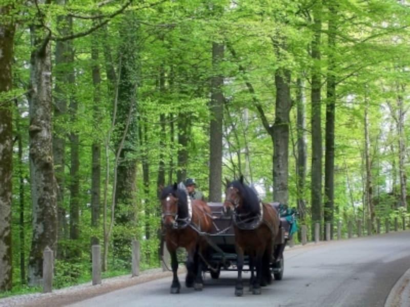 ノイシュヴァンシュタイン白亜の城undefinedドイツundefinedundefined馬車
