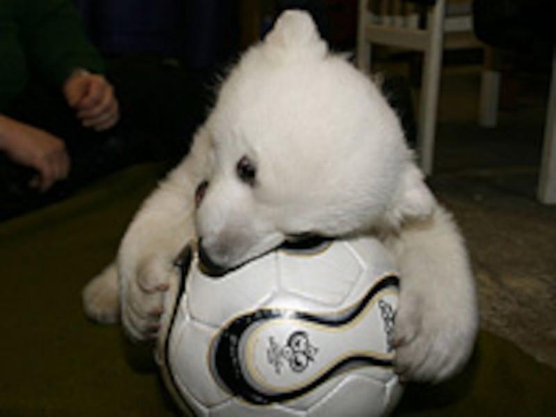 """白クマの赤ちゃん""""クヌート"""""""