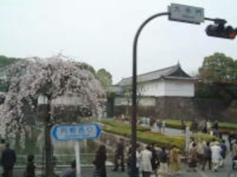 皇居・大手門としだれ桜