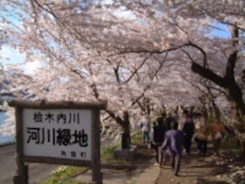 角館・檜木内川の桜並木(2)