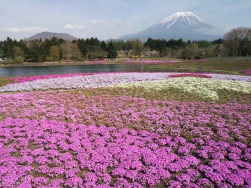 富士芝桜まつりから眺める富士山(1)