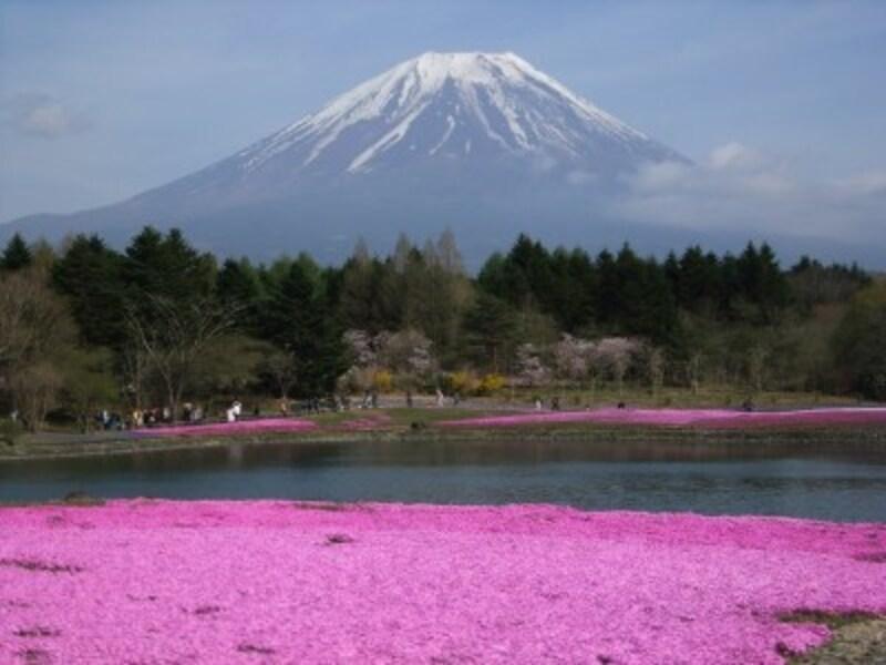 富士芝桜まつりから眺める富士山(2)