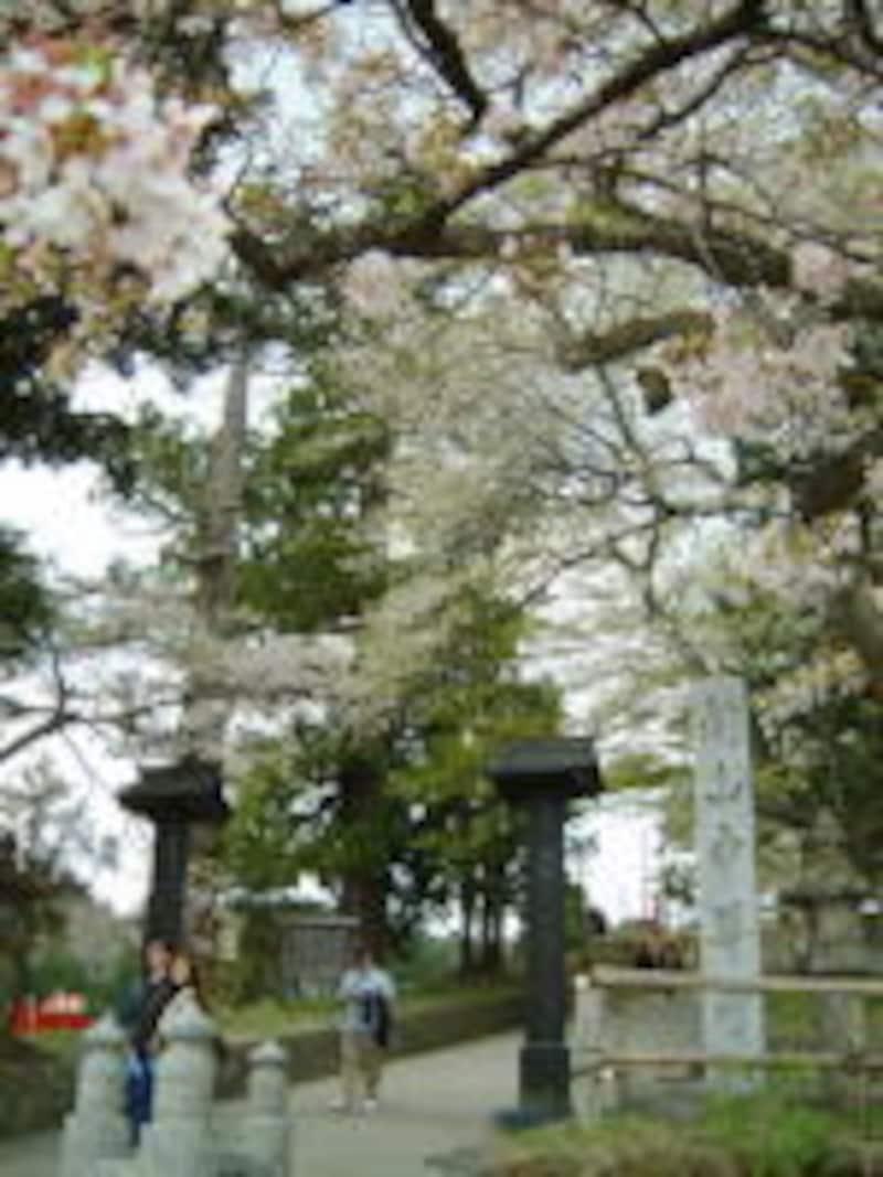 中尊寺境内への入口