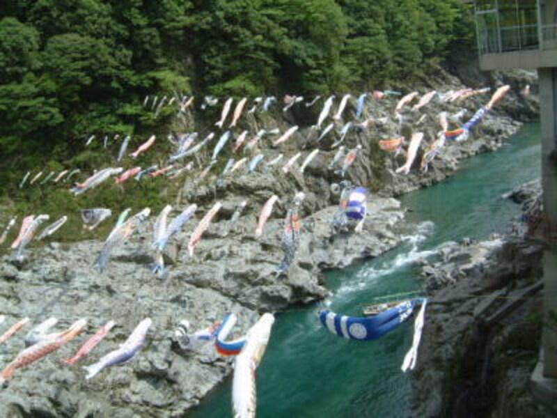 鯉のぼりが優雅に泳ぐ大歩危峡