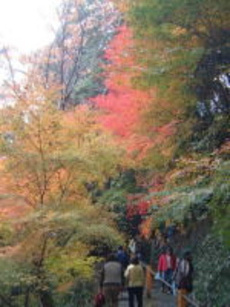 善峯寺(3)/参道の紅葉