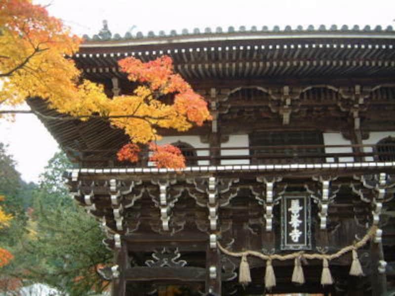 善峯寺(1)/山門と紅葉