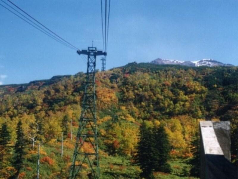 大雪山・旭岳の紅葉・黄葉(1)