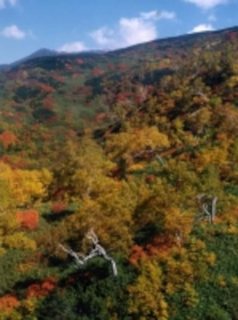 大雪山・旭岳の紅葉・黄葉(2)