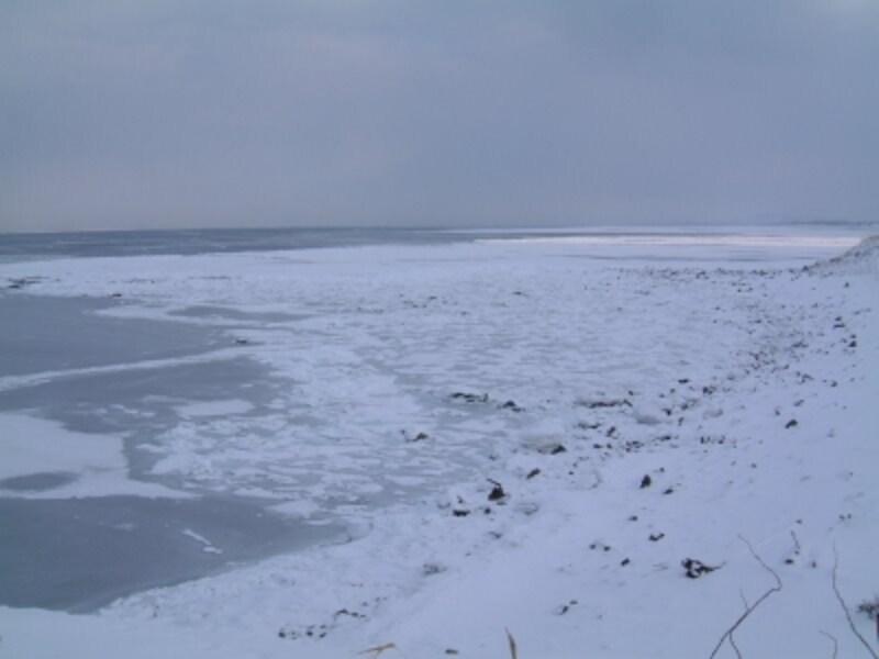 日の出岬から眺める流氷