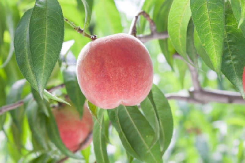 果物は甘いだけではなく酸っぱさやほんの少しの苦さ、特有の香りなどを持っています。