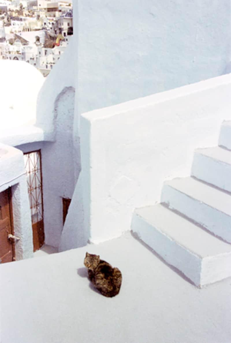 サントリーニの猫