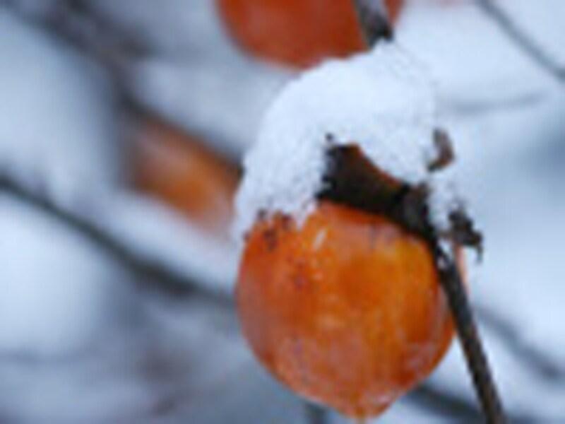 お葬式に参列したために風邪をひいたり具合が悪くなってしあうことがないように、防寒対策をしっかりと!