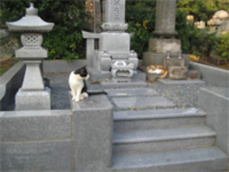 建墓は気持ちの整理がついてからでも大丈夫です