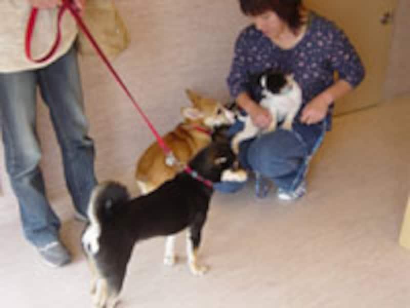 犬としてのつきあい方を身につけることができるパピークラス