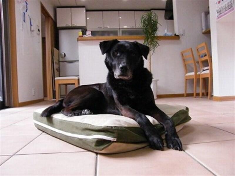 室内で犬を撮る