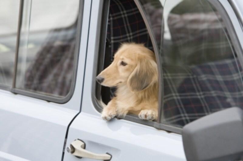 犬を乗せる位置も考えたい