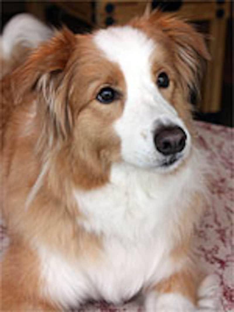 タッチやマッサージのモデル犬も務めるマーロンちゃん