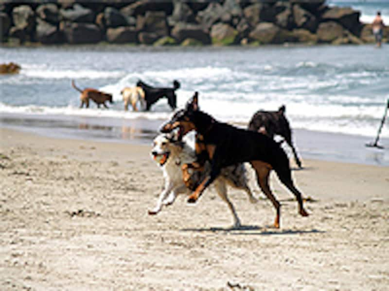 サンディエゴの犬達