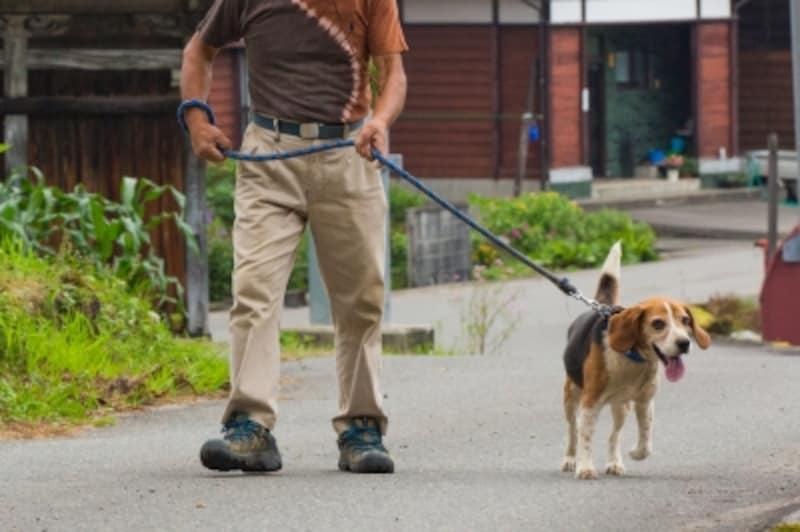 無理なく、適度な散歩を