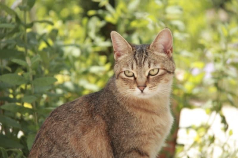 猫が来なくなる方法とは?庭づくり・糞尿被害対策