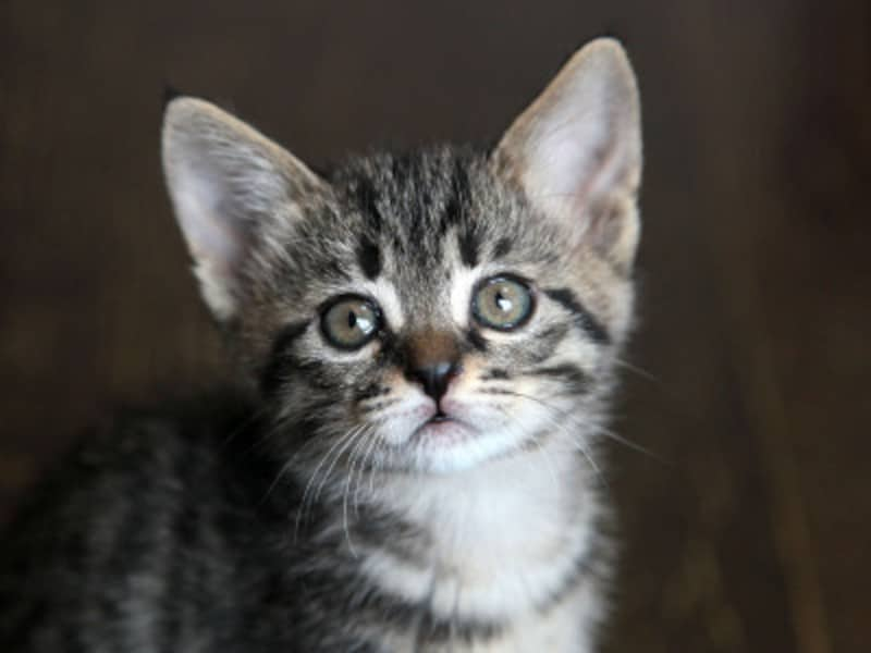 猫が帰ってこない場合の探し方をご紹介