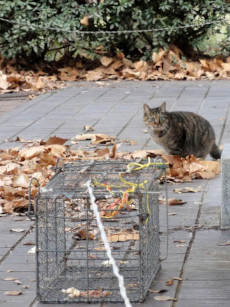 猫が捕まらないときは捕獲機で