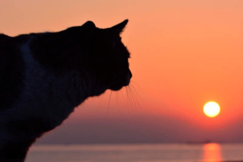 猫の探し方のコツ猫は夜行性なので夜にも探そう
