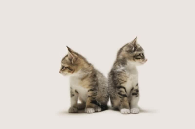 縄張り意識の強い猫という可能性も