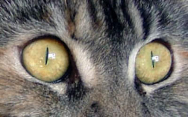 明るいところでは針のような瞳孔