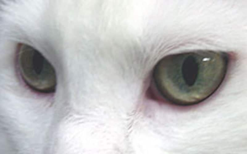 少し暗いところでは瞳孔が拡がります