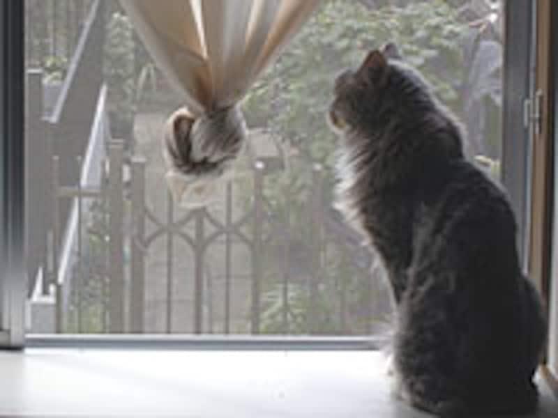 窓から外を眺めるネコ♪