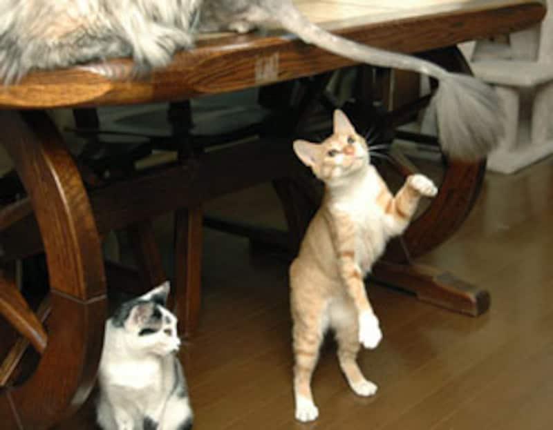 でっかい猫じゃらし!